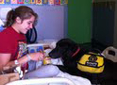 Service Dogs Therapy Dogs And Companion Pet Training Center
