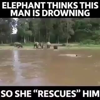 "#Elephant saves ""drowning"" man!"