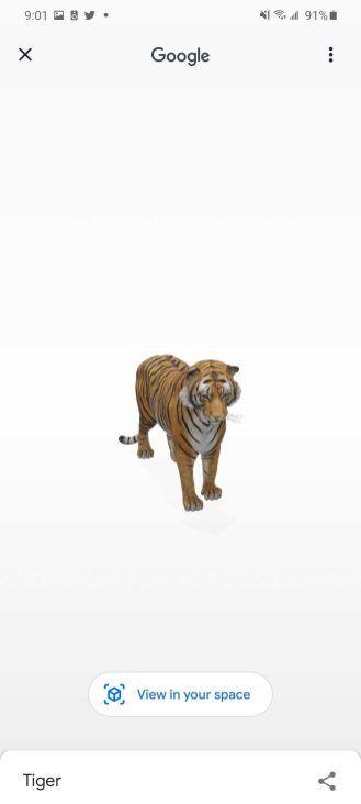 Google 3d List Of Animals Animals Lions