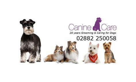 Omagh Enterprise » Blog Archive Business Profile: Canine