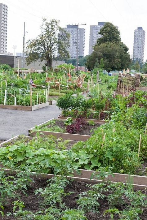 Fight poverty with urban agriculture
