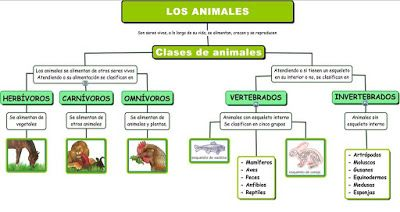 Reino Animal Mapa Conceptual Mapa Conceptual Mapa Conseptual Mapas