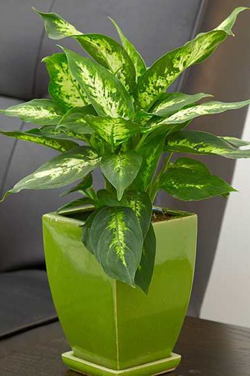 23 Of Our Favorite Low Light Houseplants Plants Easy House Plants Cactus House Plants