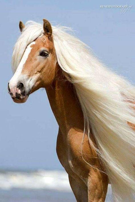 Sharp Eye by Jerry Sintz 22x32 Western Mane Photo Poster HORSE ART PRINT