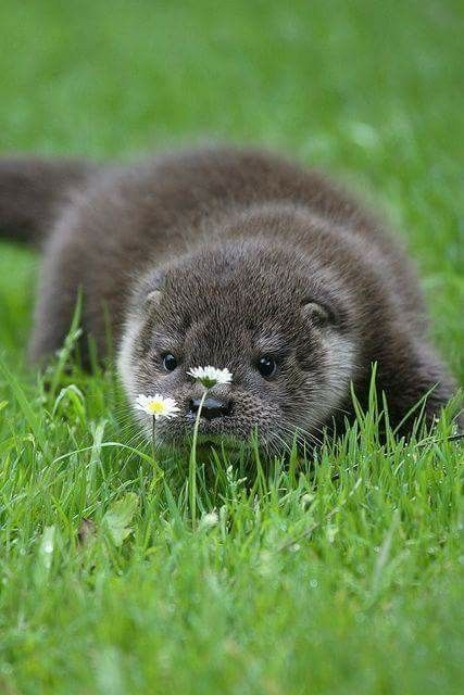 I Like These Flowers I Want To Take Them To Mom Cute Animals