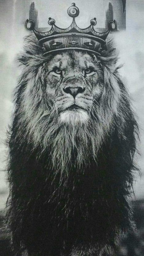 Lion Eyes Iphone Wallpaper Lion Pictures Lion Art Lion Tattoo