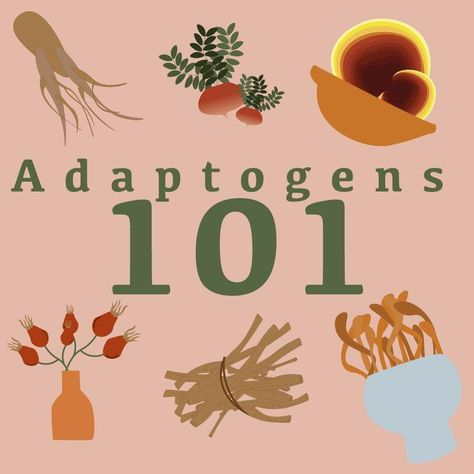 Adaptogens 101 - Herbs to Manage Stress, Fatigue, and Hormonal Balance - Peak and Valley