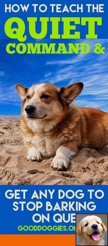 Dog Behavior Forums And Dog Training Courses Nsw