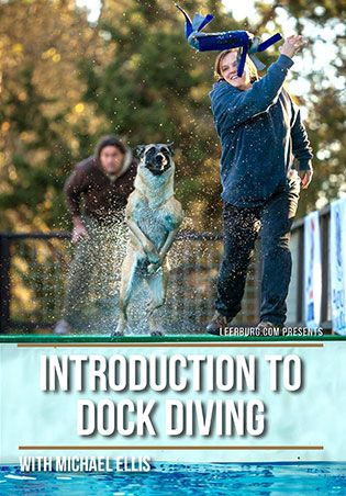 Introduction To Dock Diving With Michael Ellis Dog Activities