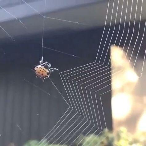 Präzises Spinnennetz #Tiere