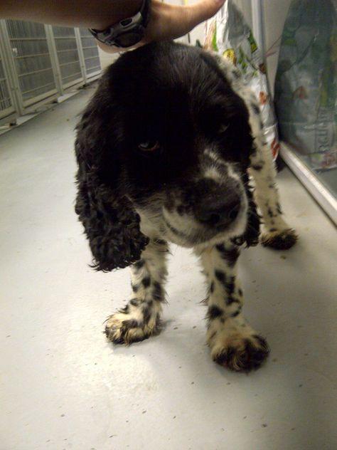 Dog Found Trussville Al Deerfoot Parkway Area Male Black