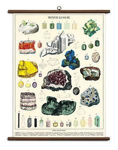 Cavallini Vintage Poster Kit Seed To Stem Vintage School Vintage Posters Hanging Art