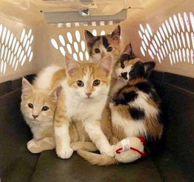 This Heartwarming Story Comes Out Of Cloquet Minnesota Where Four Kittens Were Found In A Dumpster By A Custodian At Cloquet High Kittens Cat Lovers Mama Cat