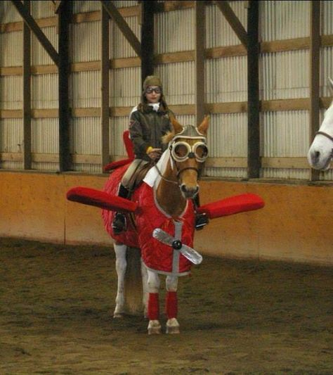 Horse, Halloween Costume - Plane and pilot