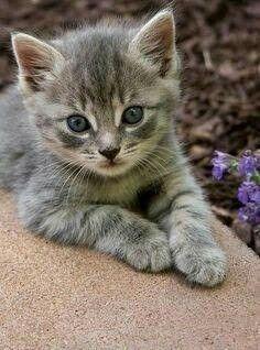 Pin By Mona Moni On Gatti Tabby Kitten Kittens Cutest Pretty Cats