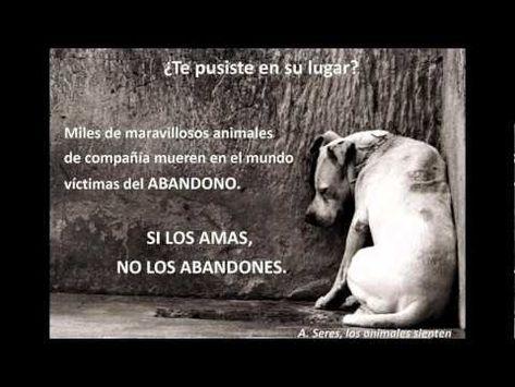 NO A LOS  ABANDONOS DE ANIMALES
