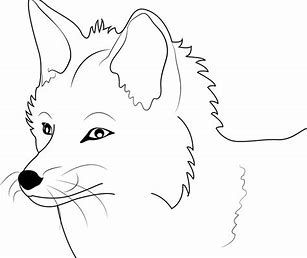 Image Result For Fox Face Color With Images Fox Coloring Page