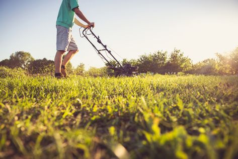 Common Lawn Weeds And How To Treat Them