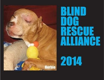 Blind Dog Rescue Alliance United States And Canada Blind Dog