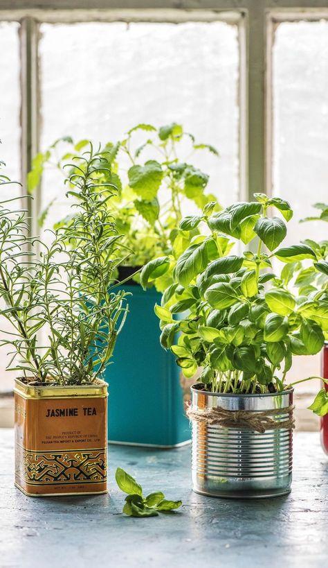 Selbstgemachter Krautergarten Kuche Krautergarten Kuche Diy Krautergarten Und Pflanzen