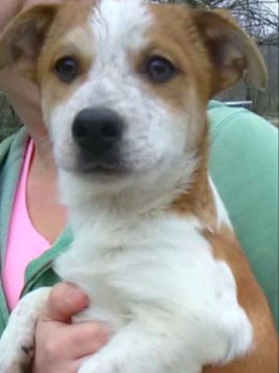 Dogs For Adoption Petfinder Dog Adoption Dog Love Pet Adoption