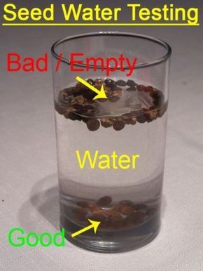 Test seeds for planting quality by placing them in a glass of water. If they flo. - Test seeds for planting quality by placing them in a glass of water. If they float, toss them. Planting Flowers From Seeds, Planting Seeds, Plant Seeds Indoors, Flower Seeds, Planting Succulents, Growing Plants, Growing Vegetables, Growing Tomatoes, Gardening For Beginners