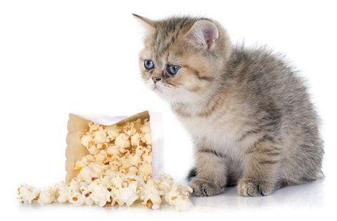 Can Cats Eat Popcorn? Cats, Cats, kittens, Cat sleeping