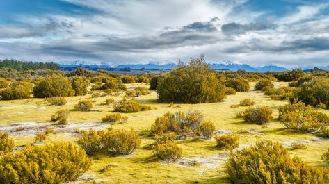 Here's a new photo from a unique area of the south island of New Zealand between Queenstown and Milford Sound. There is a cool chunk of land where there is this glowing yellow matte of moss. It's super thick and spongey... It's so soft that you can fall backwards into it and bounce softly like an Earth-trampoline. #TreyRatcliff #Landscape #NewZealand #HDR