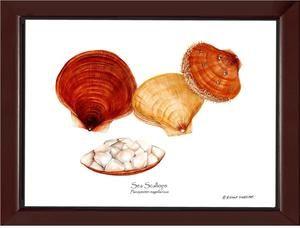 Shellfish Print Scallops Sea Beach House Art Scallops Shellfish
