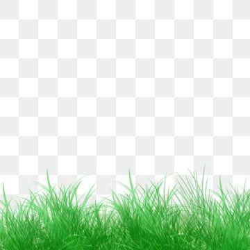 Grass Green Grass Cartoon Green Grass Cartoon Green Space Green Space Decorative Green Space Grassland Grass Cl In 2020 Green Grass Background Fresh Green Grass Flower