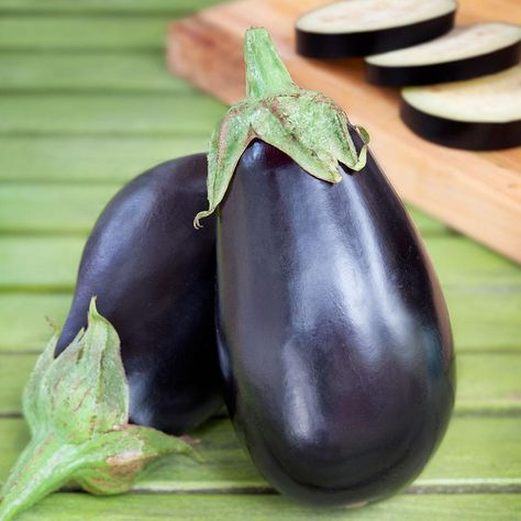 photo-black-beauty-eggplant-bush