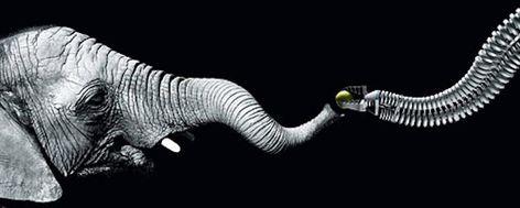 Elephant Trunk Inspires Robotic Design