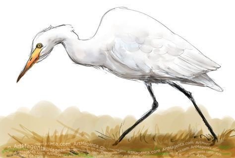 Cattle Egret In 2019 Animal Drawings Drawings Bird Drawings
