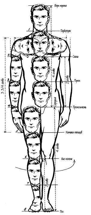 оставшегося пропорции фигуры человека в рисунке официального