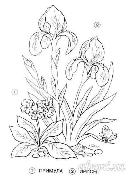 Pin By Grammy Carol On Tole Painting Flower Drawing Flower Coloring Pages Flower Art