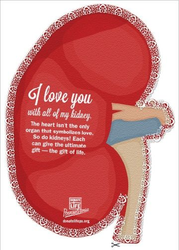 """HARRISBURG, Pa. (February 7, 2017) — I love you with all of my…kidney? Each year, Valentine's Day coincides with National Donor Day, and Donate Life Pennsylvania is inviting everyone to get ready for February 14 with custom digital greeting cards that celebrate both occasions. """"I would let my heart be yours,"""" reads one of the cards. Another says, """"I love you with all of my kidney."""""""