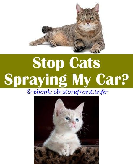 how can i tell if my female cat is spraying