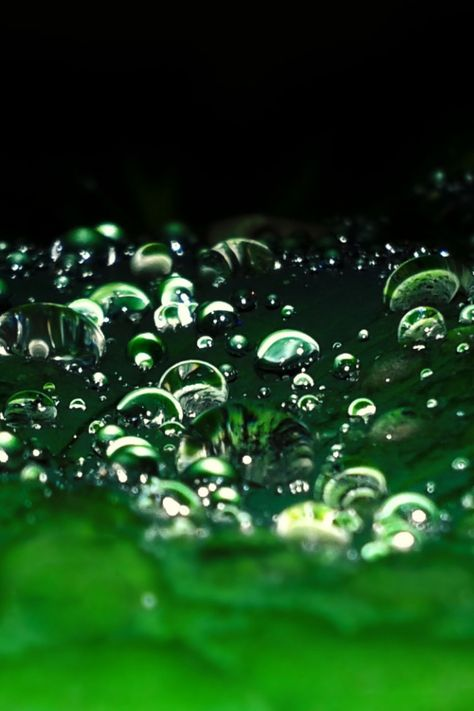 Green Rain Drops Iphone Wallpaper Black Green