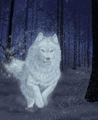 Good morning everyone! #wolves #wolf #beautiful #goodmorning #fashionmagenet