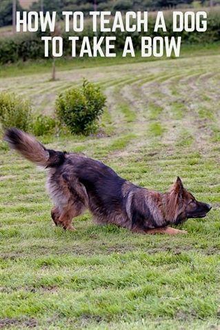 Dog Potty Training Grass Dog Training Upper Valley Small Dog