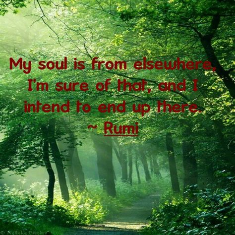 List Of Pinterest My Soul Is From Elsewhere Rumi Images My Soul Is