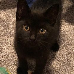 Pet Card Cat Adoption Pets
