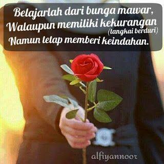 80 Gambar Bunga Mawar Dan Kata2 Romantis Paling Keren