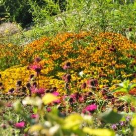 Einen Bauerngarten anlegen: Schritt für Schritt zum Gartenglück ...