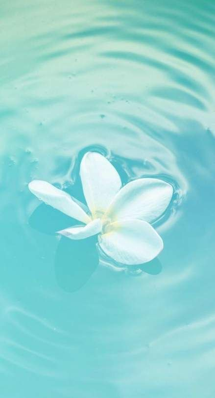 53 Super Ideas Photography Tumblr Blue Aqua Photography Flowers
