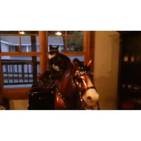 womensunglasses First Time Horseback Riding💥...