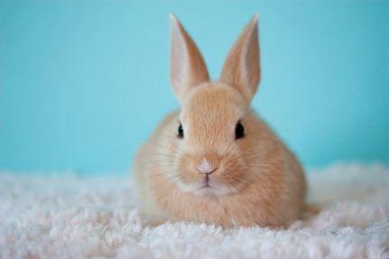 Kaninchen Artgerecht In Der Wohnung Oder Im Garten Halten Niedliche Tierbabys Susseste Haustiere Und Tierbabys