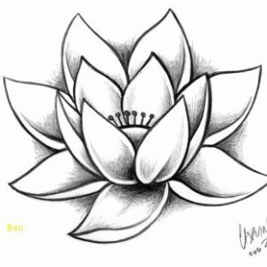 Fleur Lotus Dessin Impressionnant Dessin Fleur De Lotus Inspirant
