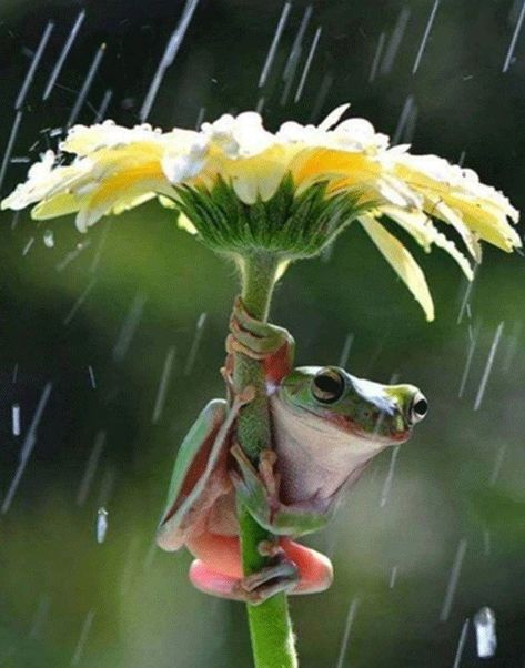 Getting Out Of The Rain by ByDesyn on Etsy