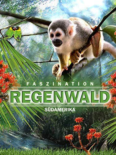 Faszination S Damerika Regenwald Faszination Damerika Regenwald Regenwalder Sudamerika Wald